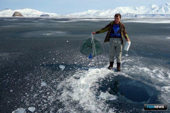 В Курильском озере нашли две ранее не изученные группы озерных гольцов. Фото пресс-службы Кроноцкого заповедника