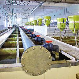 Цех для круглогодичного выращивания посадочного материала форели построен по датской технологии