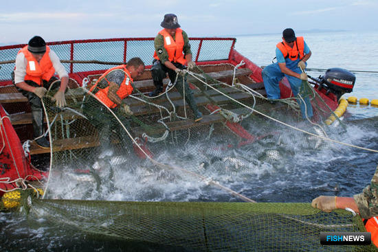ФАС настаивает на усилении контроля за выловом и сбытом рыбы