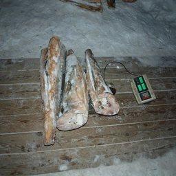 В поселке Де-Кастри сотрудники полиции изъяли более 900 кг осетровых. Фото пресс-службы УМВД России по Хабаровскому краю