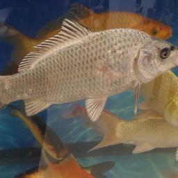 На стенде Ассоциации «Росрыбхоз» можно было познакомиться с многообразием рыбы, которую выращивают предприятия по всей стране