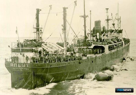 Первая советская китобойная база «Алеут». Фото из личного архива Виктора Щербатюка