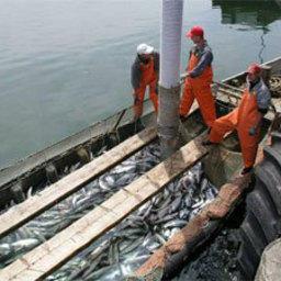 В Сахалинской области утверждены схема размещения и типовой перечень рыбоводных сооружений