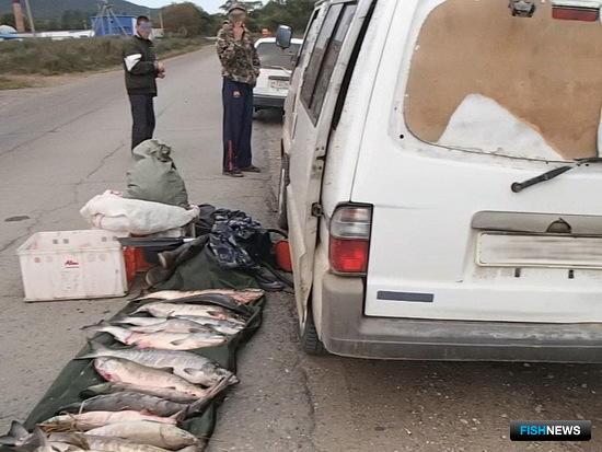 Крупная партия лосося изъята на «Земле леопарда». Фото пресс-службы ФГБУ
