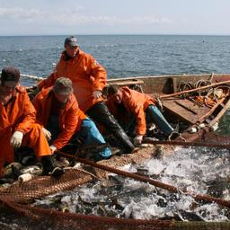 Сахалин получил «лососевые» поручения