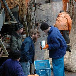 ФАР пообещало решить вопрос с «научными» уловами