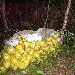 Источник: Пограничное управление ФСБ России по Приморскому краю