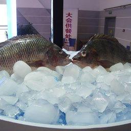 Циндао сделал рыбу
