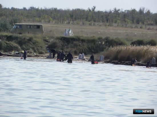 Добыча цист артемии в прибрежной зоне