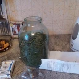 Помимо «краснокнижной» рыбы в доме подозреваемого полицейские обнаружили более 100 граммов марихуаны. Фото пресс-службы регионального УМВД
