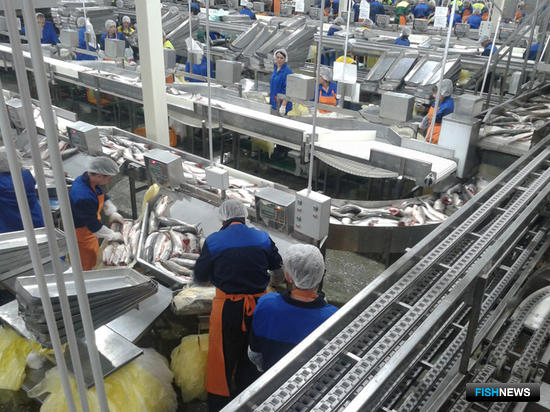 Хабаровский край сегодня занимает второе место по добыче лосося среди дальневосточных регионов
