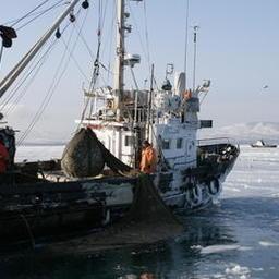 Сахалинские рыбаки оценили плюсы консолидации
