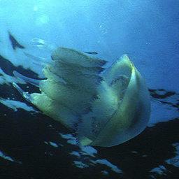 «Ядовитое» Японское море