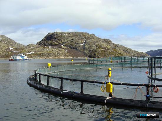 Рыбоводам оставили норвежского малька