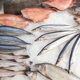 Рыбный сектор в этом году составили полсотни российских и зарубежных компаний, не считая национальных стендов