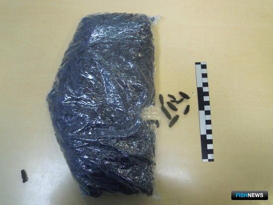 Пограничники Приморья пресекли попытку вывоза за границу более 7 кг сушеного трепанга. Фото пресс-группы погрануправления