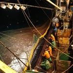Сайровый промысел-2014: много рыбы и успешная организация