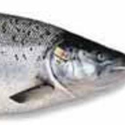 Экспорт норвежской рыбопродукции в 2006 году побил рекорды всех предыдущих лет