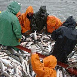 Ловим лосось