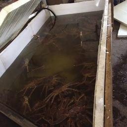 Один из нелегальных цехов во Владивостоке был оборудован для содержания краба в живом виде.