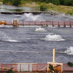Садки у лососевого рыбоводного завода в Сахалинской области