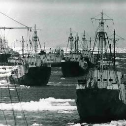 Китобойцы в Антарктике. Фото из личного архива Виктора Щербатюка