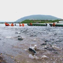 Подход лосося к побережью Камчатки