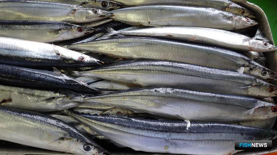 Рыбаки и наука обсудили вопросы сайрового промысла