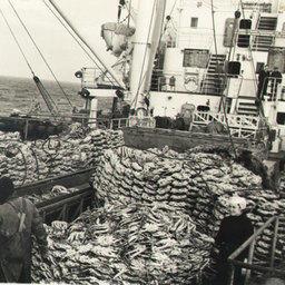 Бристольский залив. Плавбаза «Андрей Захаров» на испытании оборудования для разделки крабов