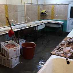 В Камчатском крае закрыли два цеха, занимавшихся незаконной переработкой рыбы. Скриншот оперативной съемки