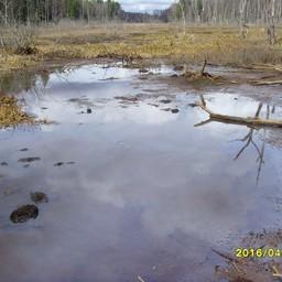 Несанкционированный сброс воды Успенской плотиной осушил нерестилища реки Клязьма. Фото пресс-службы Московско-Окского теруправления Росрыболовства.