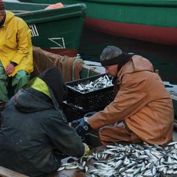 Январь стал успешным для крымских рыбаков