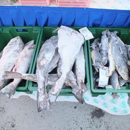 ЕЭК рассчитывает на пользу «рыбного» техрегламента