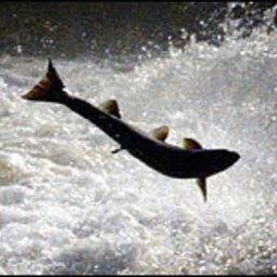 Канадские лососеводы не намерены останавливаться на достигнутом