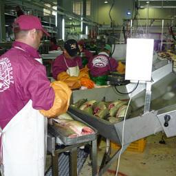 Процесс переработки на заводе компании «Корякморепродукт»