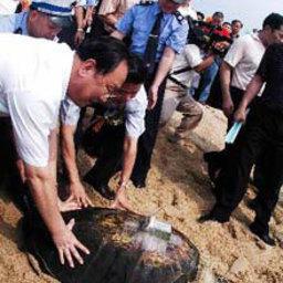 В Южном Китае выпущены на волю около 1000 морских черепах