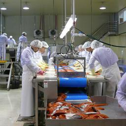 У «Витязь-Авто» семь современных перерабатывающих заводов на Западной Камчатке