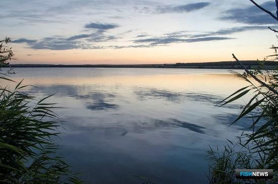 Краснояровское водохранилище (Кашарский район). Фото пресс-службы института