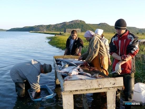 Традиционное рыболовство на Чукотке. Фото с сайта media.nazaccent.ru