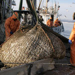 Рыбаки надеются, что «квоты под киль» остались в прошлом