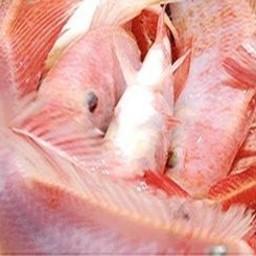 Красная тиляпия. Фото пресс-службы ФАО
