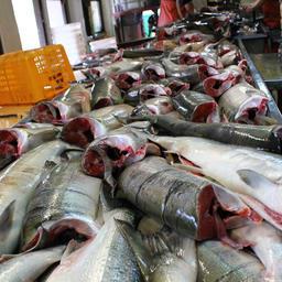 Амур в ожидании летнего лосося. Фото Марии Кабушкиной