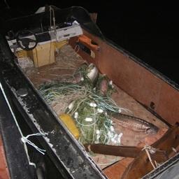 Изъято более тонны нелегальных уловов, в том числе 844 кг осетровых видов рыб. Фото пресс-службы Амурского территориального управления Росрыболовства