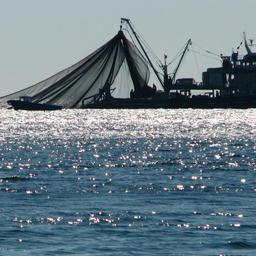 Рыбный промысел у крымских берегов. Фото пресс-службы департамента сельского хозяйства Севастополя