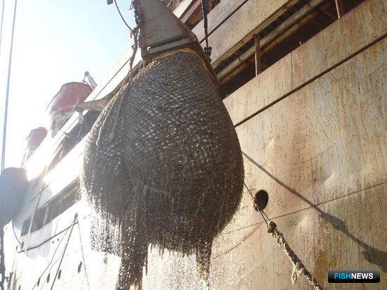 Прибрежная рыбалка в Приморье