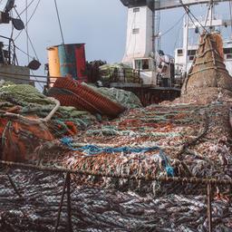 Траловый лов минтая. Фото «Русской рыбопромышленной компании»