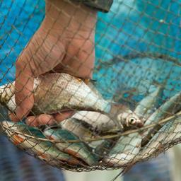 Рыбалка в Ростове-на-Дону