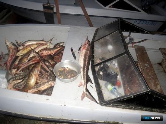 Рыбу выловили с помощью запрещенных орудий. Фото пресс-службы УМВД России по Астраханской области