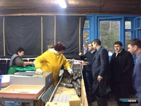 Глава Росрыболовства Илья Шестаков вместе с учеными, представителями власти и бизнеса побывал на лососевом рыбоводном заводе в поселке Мальки