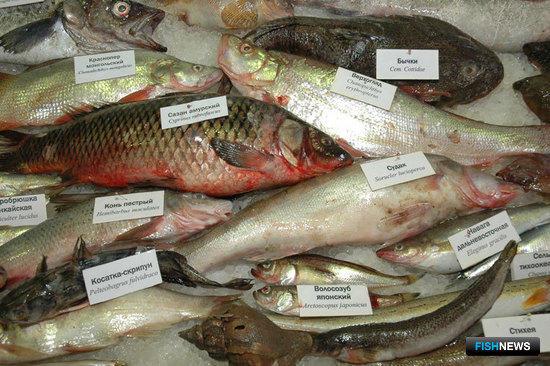 Выставка «Перспективы развития рыбной отрасли 2009»